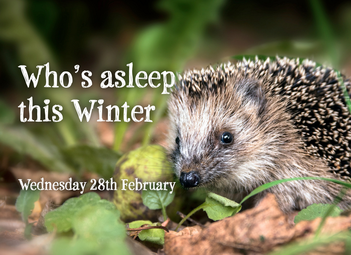Who's asleep this winter