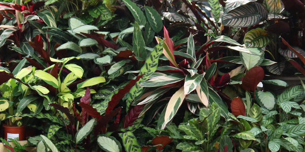 Plant of the Month - November