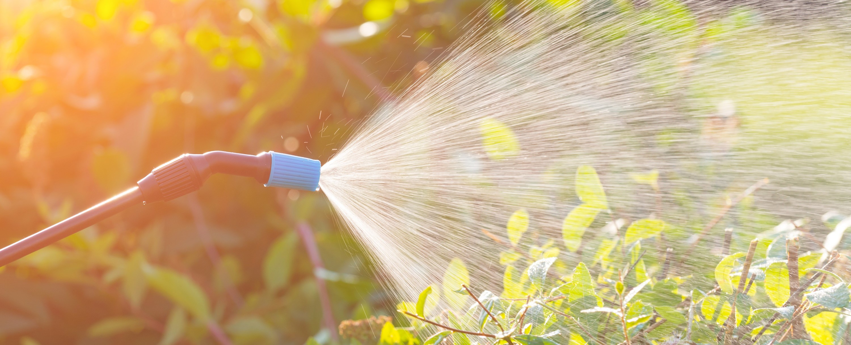Plant Disease & Pest Control