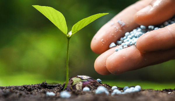 Plant Feed & Fertilisers