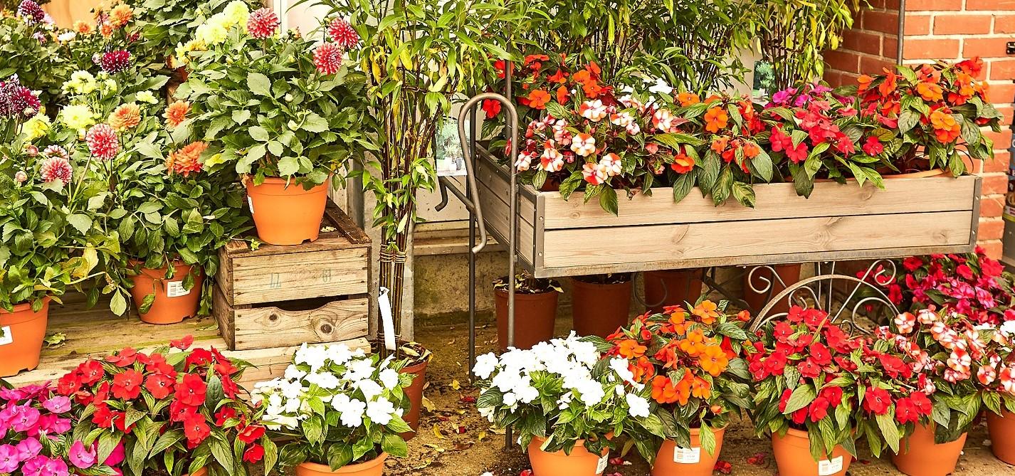 Plant Care Accessories
