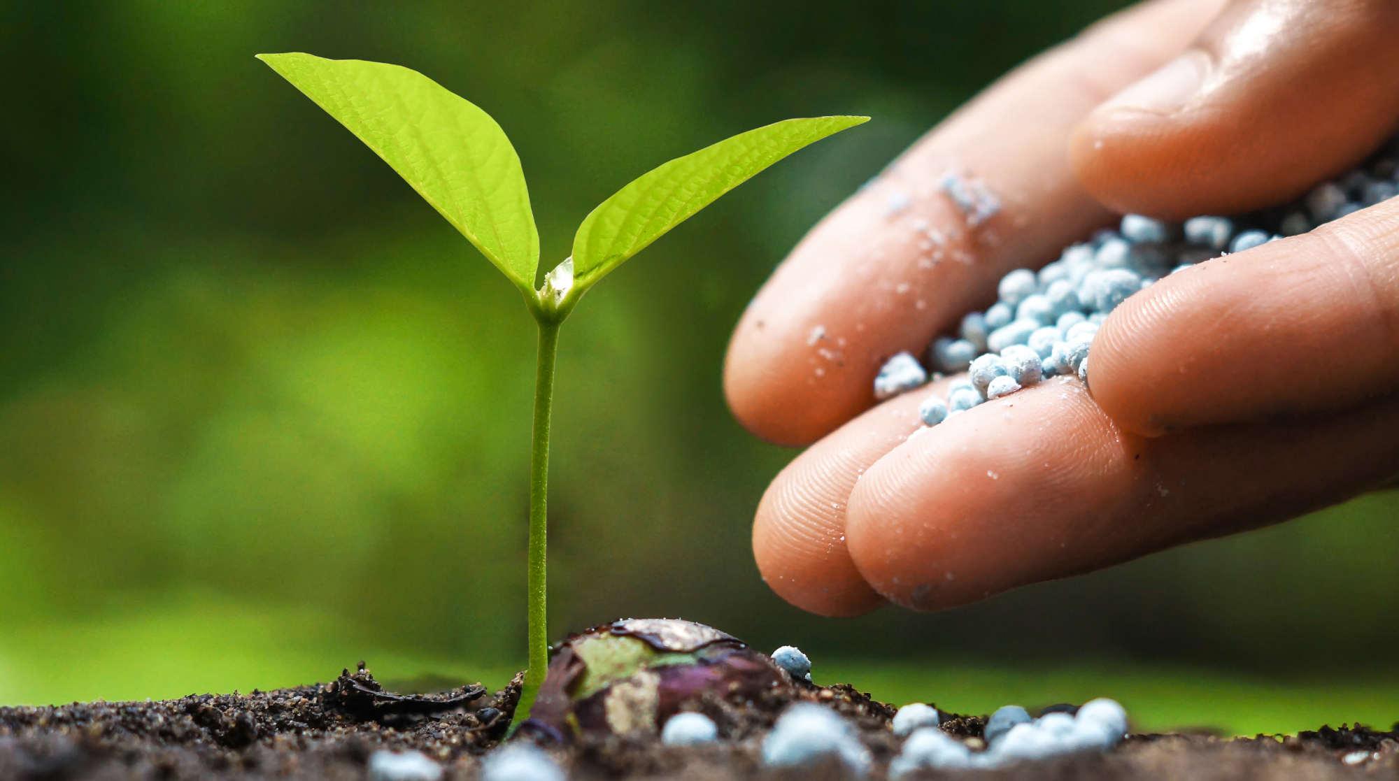 Plant Feed and Fertilisers
