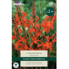 Crocosmia Masonorum - Taylors Bulbs