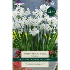 Narcissus Paperwhite Grandiflora