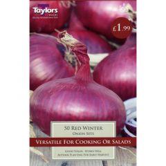 Onion Red Winter