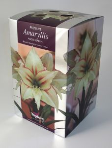 Taylors Amaryllis Magic Green
