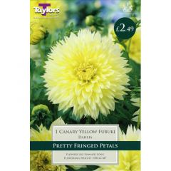Dahlia Canary Yellow Fubuki