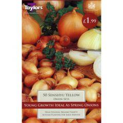 Onion Senshyu Yellow