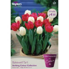 Containers of Colour Bakewell Tart - Taylors Bulbs