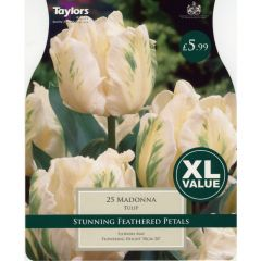 Tulip Madonna XL Value (20 Pack) - Taylors Bulbs