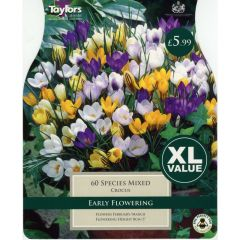 Crocus Species Mixed XL Value