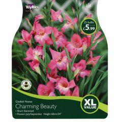 Gladioli Nanus Charming Beauty XL Value