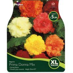 Begonia Prima Donna Mix XL Value