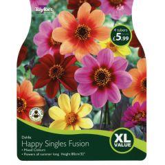 Dahlia Happy Singles Fusion (Mix) XL Value