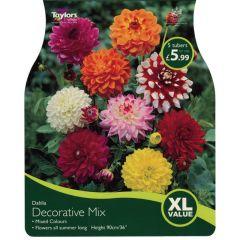 Dahlia Decorative Mix XL Value