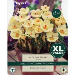 Crocus Cream Beauty XL Value
