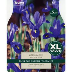 Iris Reticulata Harmony XL Value