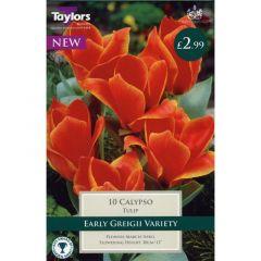 Tulip Calypso