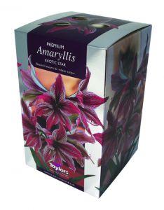 Taylors Amaryllis Exotic Star