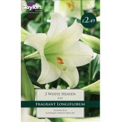 Lily White Heaven