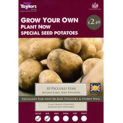 Piccolo Star 10 Pack (Second Early) - Taylor's Bulbs
