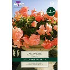 Begonia Aromantics