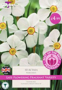 Narcissi Actaea 10 Pack- Taylors Bulbs