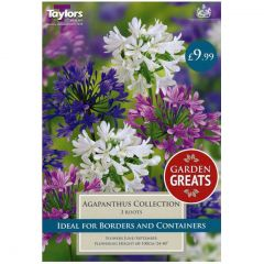 Agapanthus Collection - Taylors Bulbs