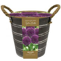 Outdoor Allium Bucket - Taylor's Bulbs