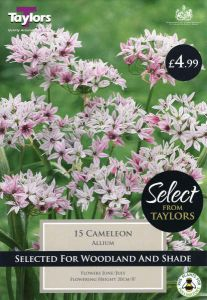 Allium Cameleon 15 Pack - Taylors Bulbs