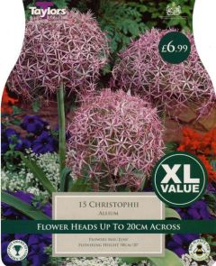 Allium Christophii XL Value - Taylors Bulbs