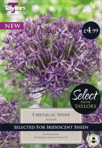 Allium Metallic Shine - 10-12 - 5 Pack - Taylor's Bulbs