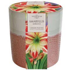 Ceramic Amaryllis Ambiance Planter  - Taylor's Bulbs