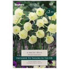 Narcissi Arctic Bells - Taylor's Bulbs