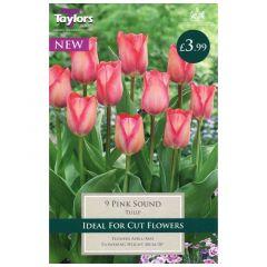 Tulip Pink Sound  - Taylor's Bulbs