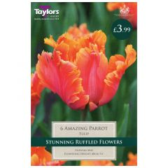 Tulip Amazing Parrot  - Taylor's Bulbs