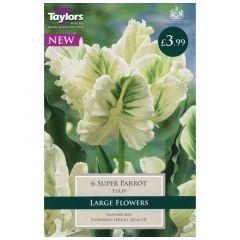 Tulip Super Parrot  - Taylor's Bulbs