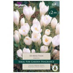 Crocus Miss Vain  - Taylor's Bulbs