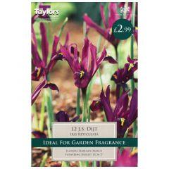 Iris Reticulata J S Dijt  - Taylor's Bulbs