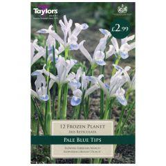 Iris Frozen Planet  - Taylor's Bulbs