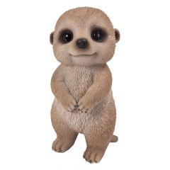 Baby Meerkat Pet Pal