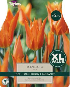 Tulip Ballerina 18 Pack - Taylors Bulbs