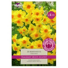 Narcissi Martinette 20 Pack - Taylor's Bulbs