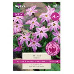 Ipheion Tessa 20 Pack - Taylor's Bulbs