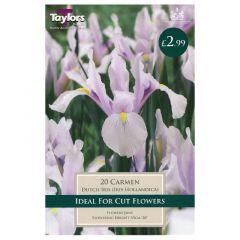 Iris Carmen  - Taylor's Bulbs