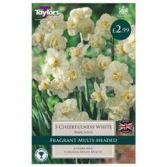 Narcissi Cheerfulness White  - Taylor's Bulbs