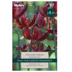 Lily Claude Shride  - Taylor's Bulbs