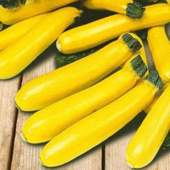 Courgette Soleil F1 Seeds- Mr Fothergills