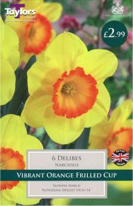 Narcissi Delibes 6 Pack - Taylors Bulbs