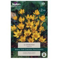Crocus Dorothy  - Taylor's Bulbs